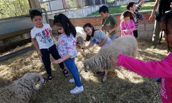 Granja Escuela 5 años de Infantil